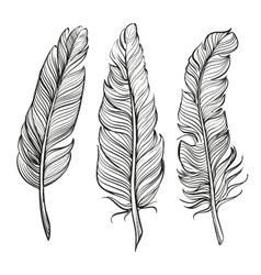 feathers set hand drawn illustration vector image