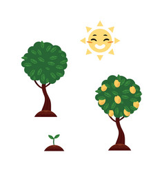 Flat tree planting stages symbols set vector