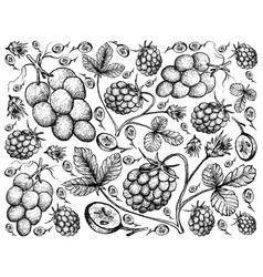 Hand drawn background of arctic bramble berries an vector
