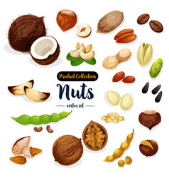 Nuts seed bean cartoon icon set for food design vector