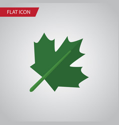 isolated maple flat icon oaken element can vector image vector image