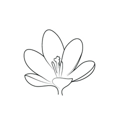 Crocus beautiful flower simple black lined icon on vector