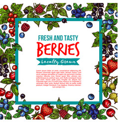 garden and forest berries sketch poster vector image