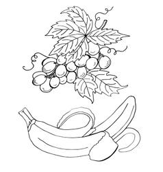 High quality original of grape and vector