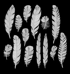 sketch hand drawn birds feathers set vector image
