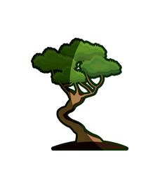 cartoon bonsai tree natural foliage image vector image vector image