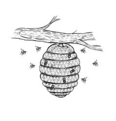 sketch of beehive vector image