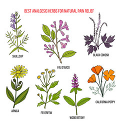 Best analgesic natural herbs for pain relief vector