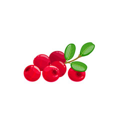 Lingonberries cranberry isolated red berry fruits vector