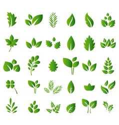 Set of green leaves design elements for you design vector image