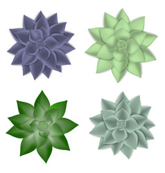 Succulent icons set realistic style vector