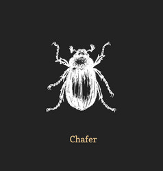 chafer beetle drawn insect in vector image