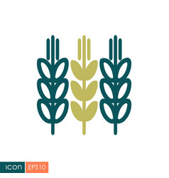 Spikelets and grains of wheat icon vector