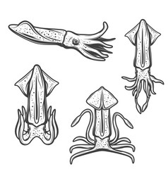 Squid sea and ocean fishing animal vector