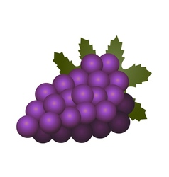 Grapes fruit isolated on white background vector image