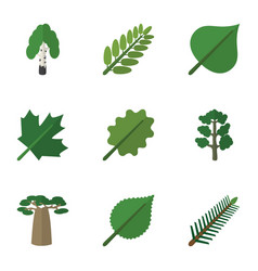 Flat icon nature set of timber spruce leaves vector