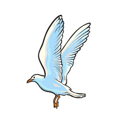 Flying seagull hand drawn vector