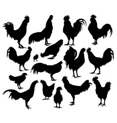 Rooster and Chicken Activity Silhouettes vector