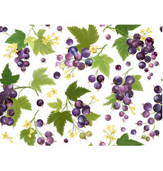 Seamless black currant pattern with summer berries vector