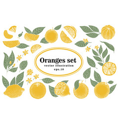 Set hand drawn citrus whole and vector