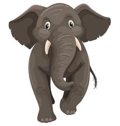 wild elephant on white background vector image vector image