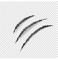 claws scratches animal or monster on transparent vector image