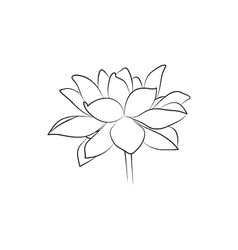 Beautiful lily or lotous flower simple black lined vector