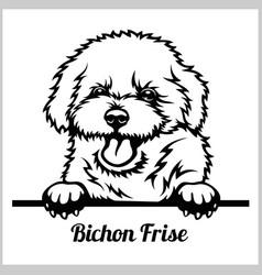 Bichon frise - peeking dogs - breed face head vector