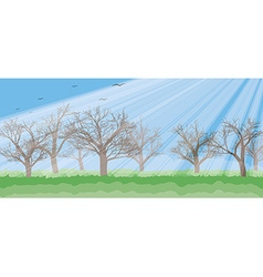 Forest in the sunny day rays trees silhouettes vector