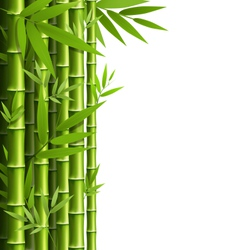 Green bamboo grove isolated on white vector image