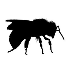 Silhouette of a bee on white background vector