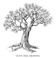 Olive tree isolated hand drawn vector image vector image