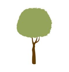 green tree leaf stem trunk image vector image