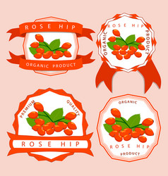 the theme rose hip vector image vector image