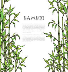 Framewith hand drawn bamboo branches on white vector