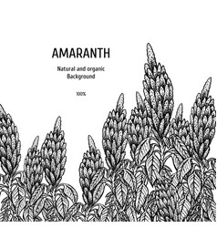 Hand drawn background with amaranth vintage vector