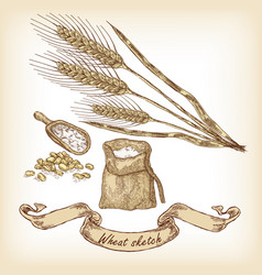 Hand drawn of wheat and grain vector