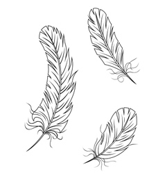 Isolated feathers and quills vector image