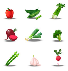 Set with fresh healty vegetables vector