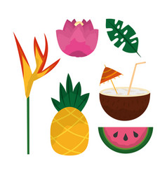 tropical set of flowers pineapple coconut cocktail vector image