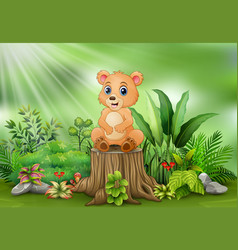 cute baby bear sitting on tree stump with green pl vector image