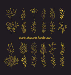 rustic decorative plants collection vector image