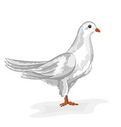 White dove White pigeon symbol peace vector image