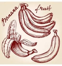 Bananas fruit set hand drawn llustration vector