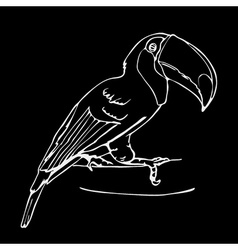 Hand-drawn pencil graphics toucan bird Engraving vector image vector image