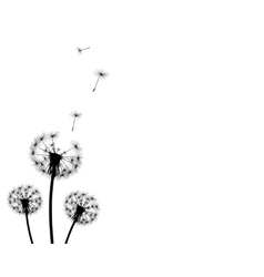 background dandelion faded silhouettes vector image vector image