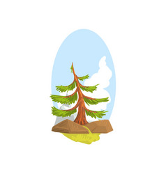 cartoon landscape with evergreen pine growing vector image