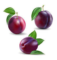 quality realistic plum collection plums vector image