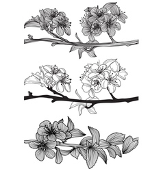 set of cherry blossoms vector image