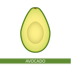 avocado isolated on white vector image